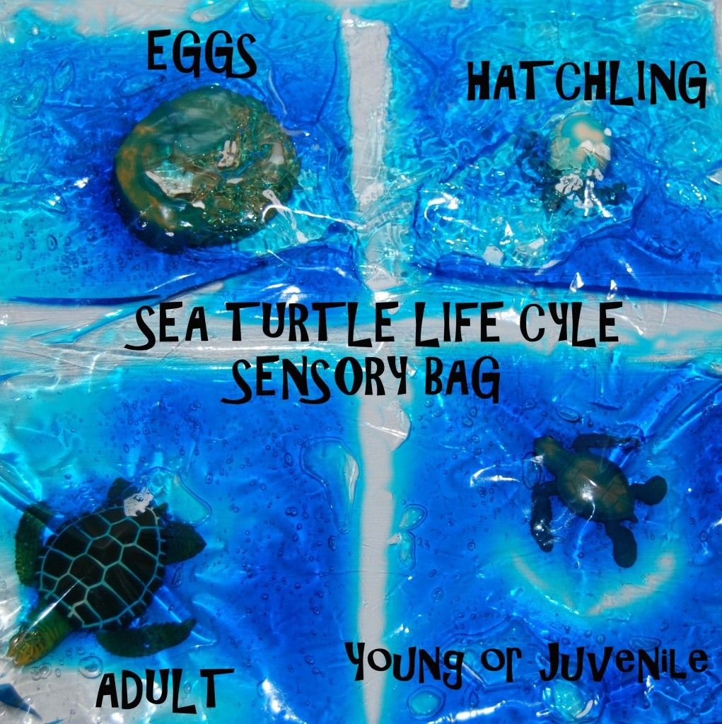 Sea Turtle Life Cycle in a SENSORY Bag is FUN Learning! in 2018 ...