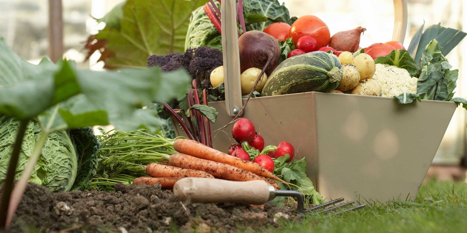 It's not too late to plant veggies for autumn harvests.