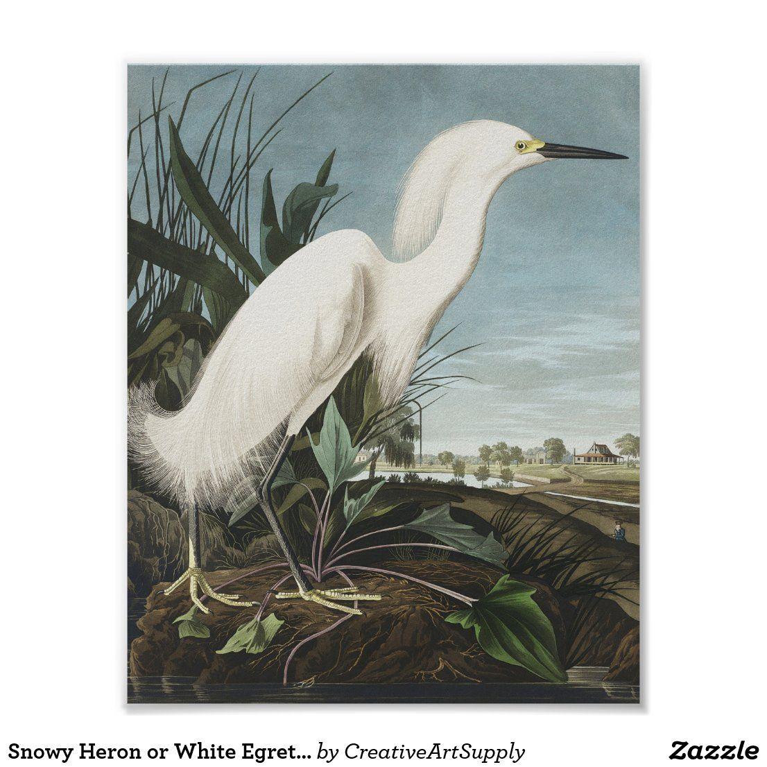 Antique Bird Painting Yellow-Crowned Heron bird vintage prints COO337 bird wall decal Heron Print Vintage Drawing Poster Wall Art