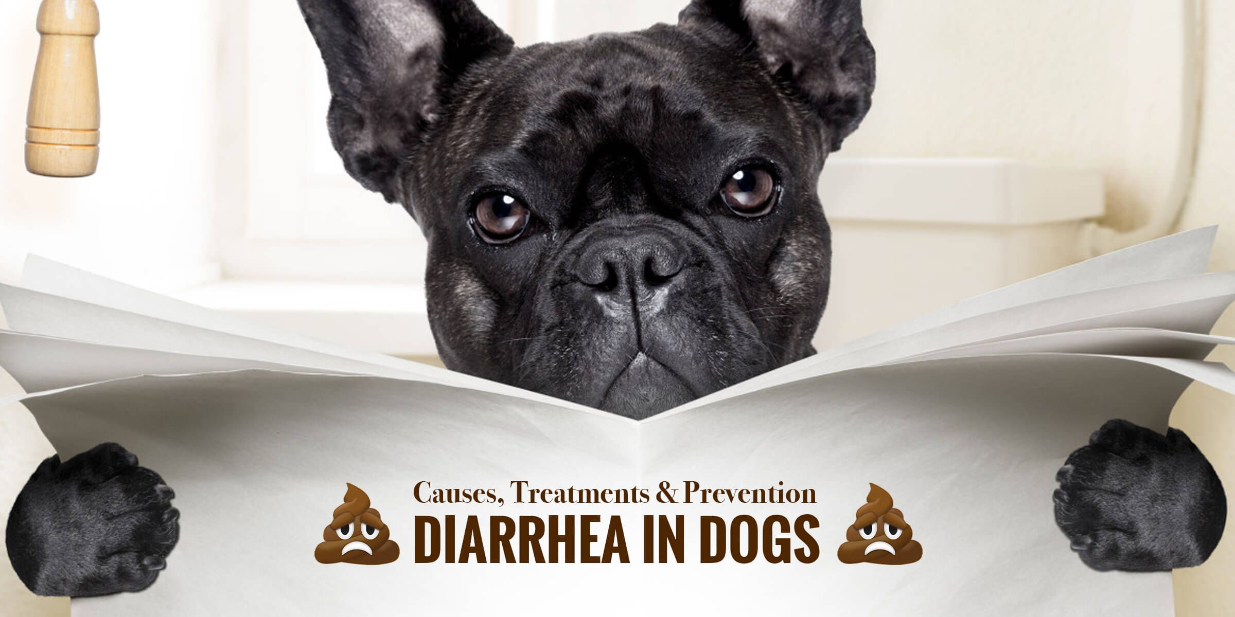 Diarrhea In Dogs Causes Treatments Prevention Diarrhea In