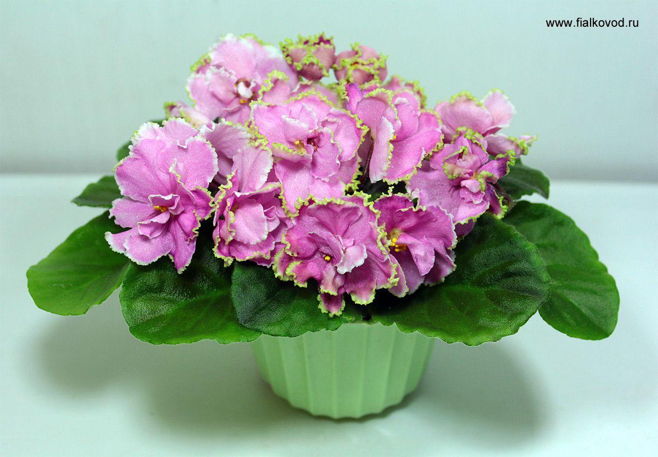Розы белые, фиалки розовый букет