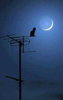 Cat With Moon Beautiful Moon Moon Art Cats