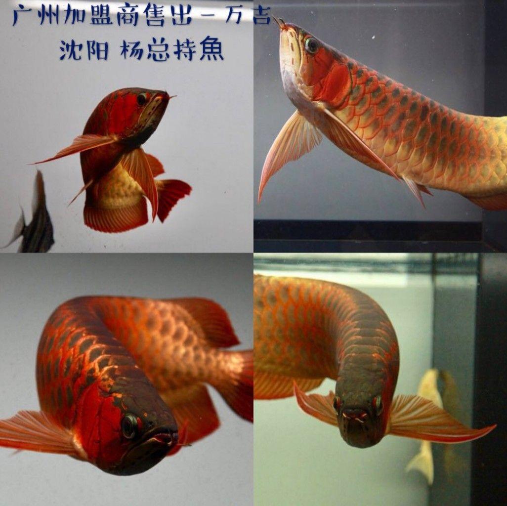 Pt Munjul Prima Utama Ikan