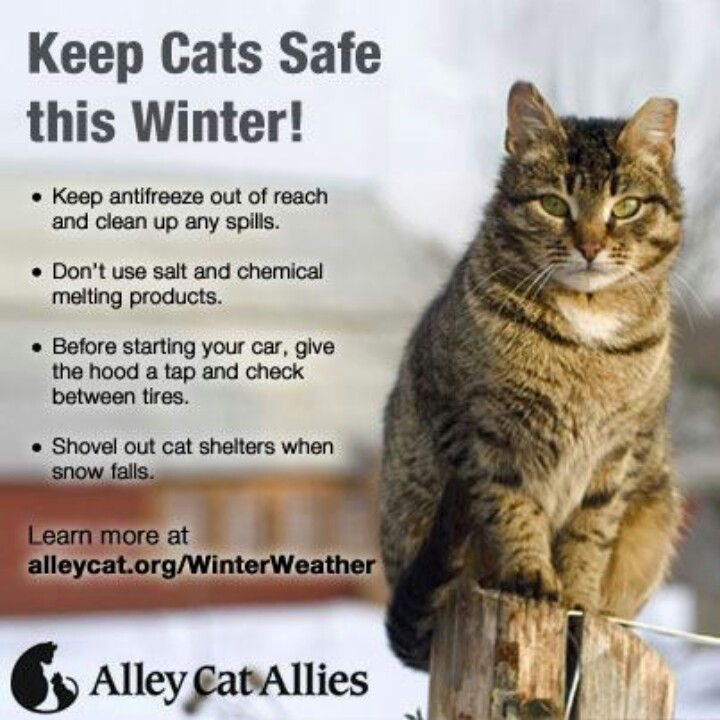 Winter Safety For Cats Alley Cat Allies Feral Cats Alley Cat