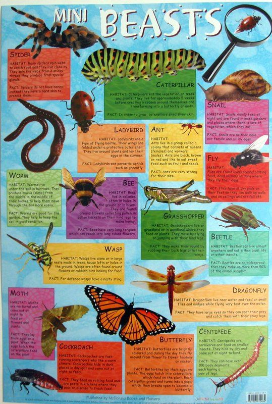educational science posters - Google Search | Science / Lit ...