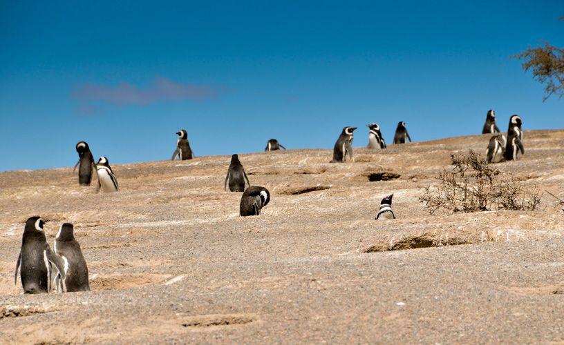 Uno de los lugares del litoral patagónico más visitados por miles de turistas de todo el mundo que se acercan para conocer la colonia continental de pingüinos Magallanes.