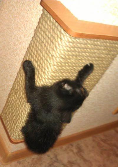 Как сделать когтеточку для кошки своими руками: мастер-класс 7