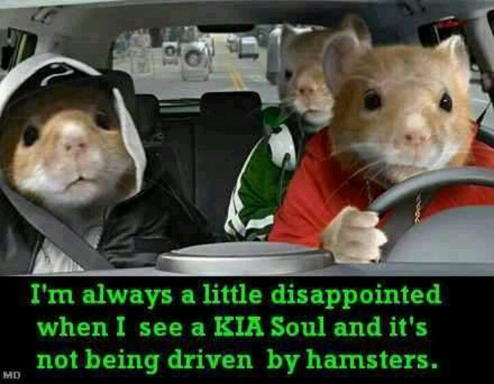 Kia Hamster Commercial >> kia soul! Lol I have a kia soul | photos and quotes | Funny, Funny pictures, Funny jokes