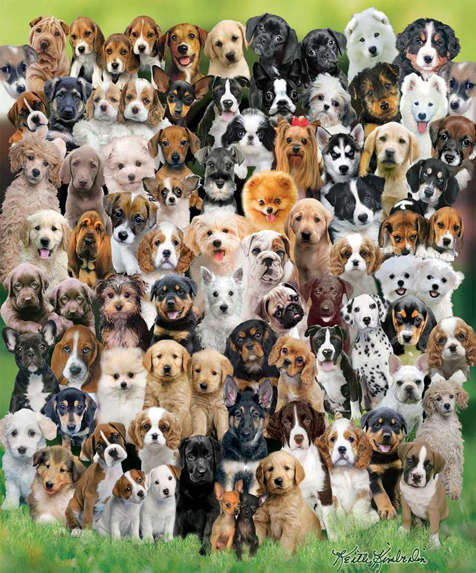Puppy Love 1000pc Jigsaw Puzzle By White Mountain Discon Dog