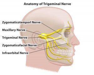 trigeminal nerve - Google Search | medical | Pinterest ...