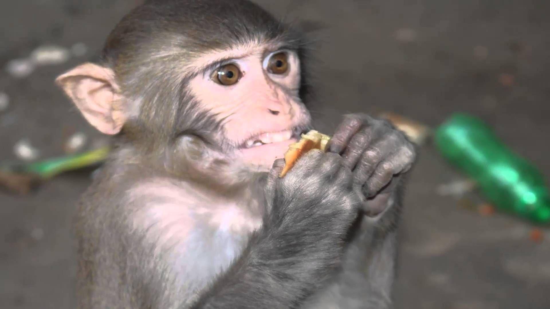 Monkey Funny Video| What Is Monkey| How to eat Monkey| Children Like Mon...