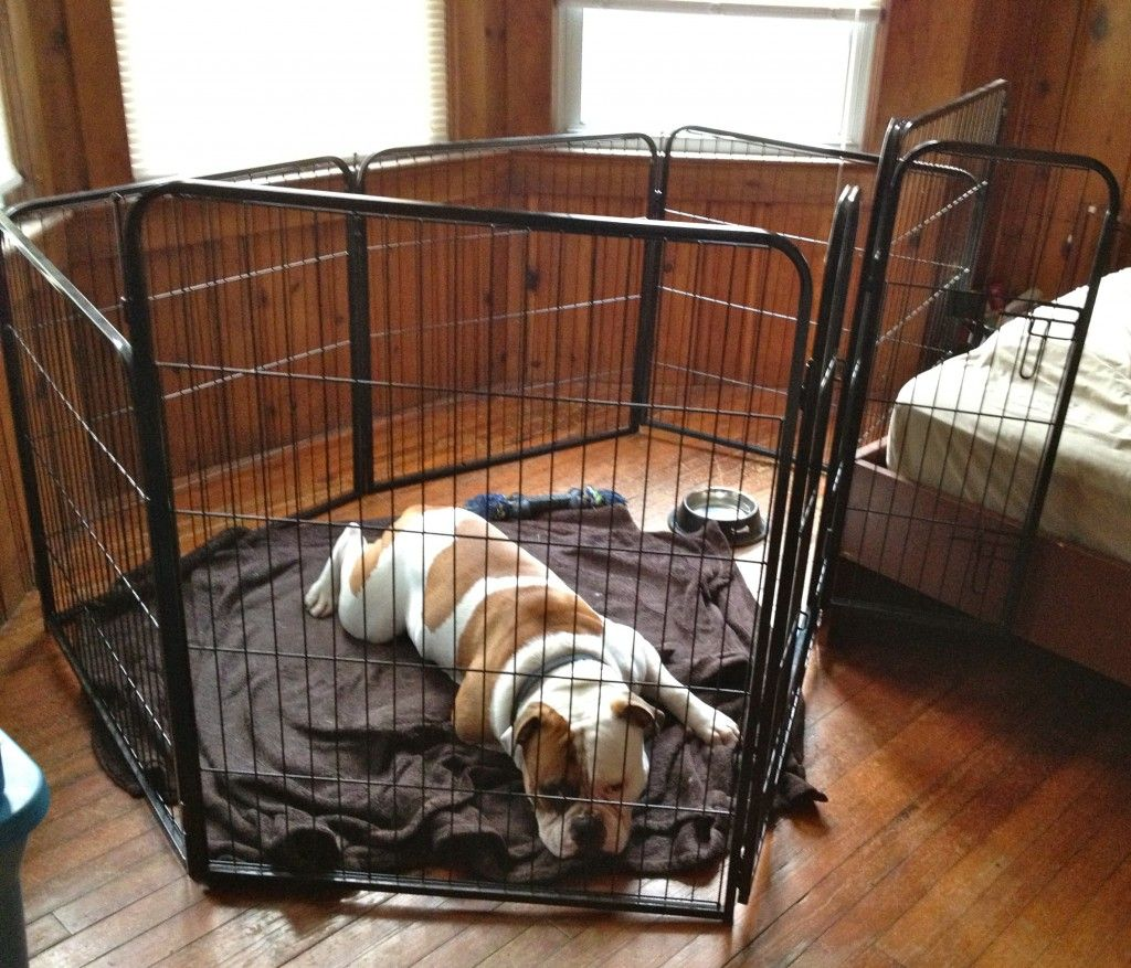 A Great Alternative To Homestyler: Great Alternative To Crate Training For Larger Dogs. #dogs