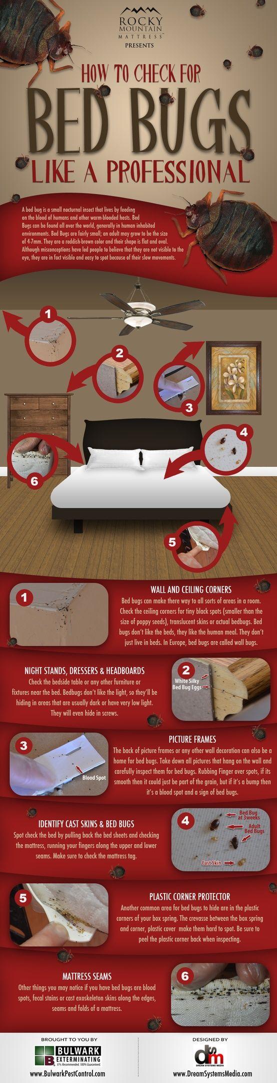 comment d tecter la pr sence des punaises de lit insects pest pinterest lit punaises de. Black Bedroom Furniture Sets. Home Design Ideas