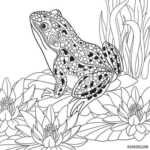 Vector Zentangle Stylized Cartoon Frog Sitting Among Lotus Flowers Water Lilies Sketch