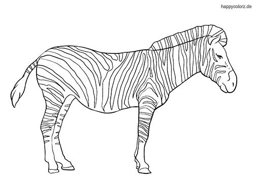steppenzebra malvorlage  zootiere giraffe ausmalbilder