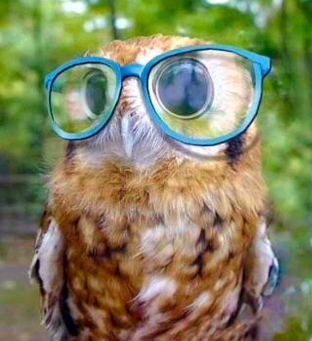 Nerd Owl