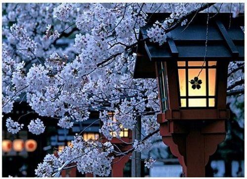 Kyoto, Japan photo via mayyew
