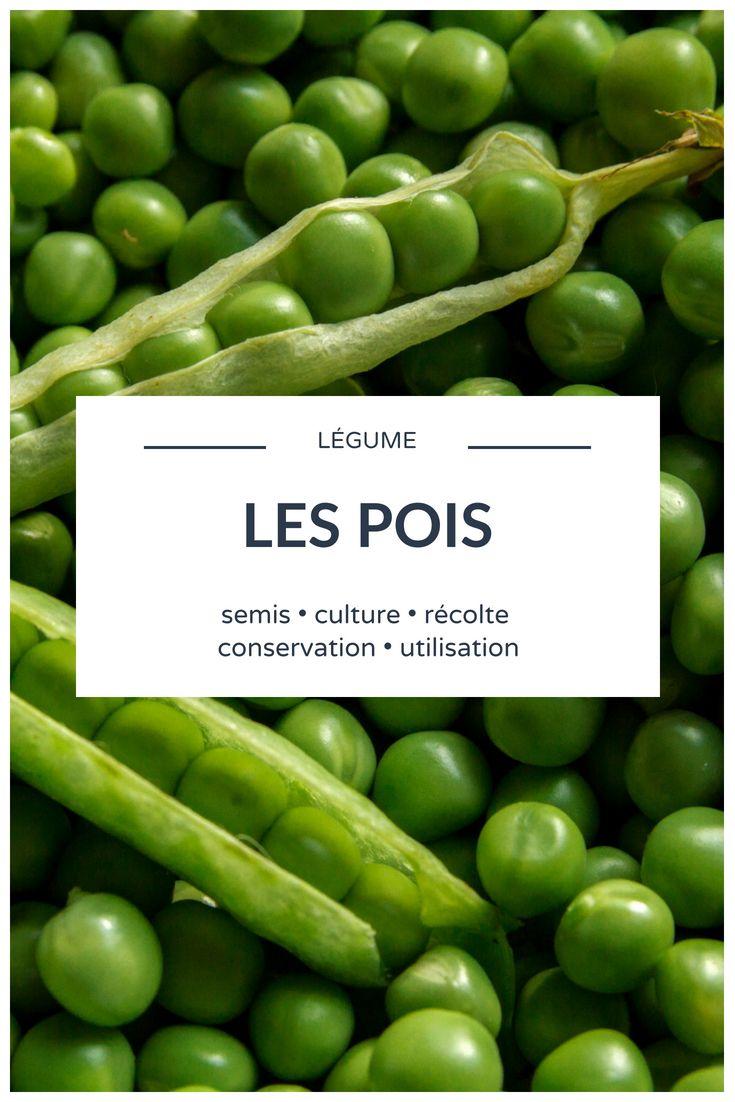 Pois Et Petits Pois Semer Cultiver Recolter Au Potager En 2020