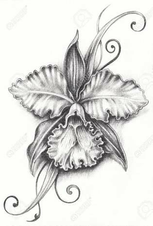 Cataleya Romance Lesbico Completo Pencil Drawings Orchid Drawing Flower Tattoo Drawings