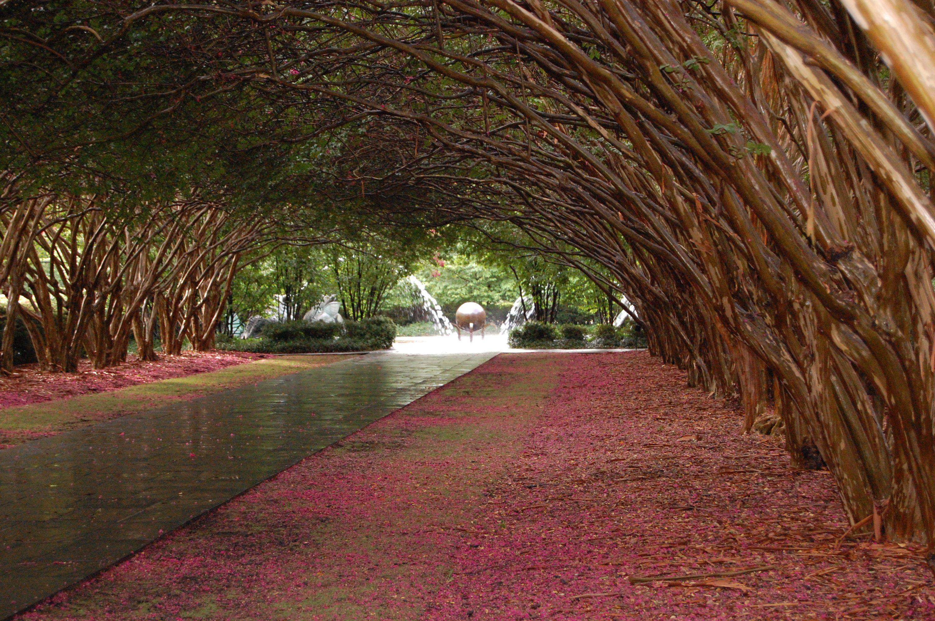 Dallas Arboretum. Crate Myrtle Alee, summer | Some Places & Spaces ...