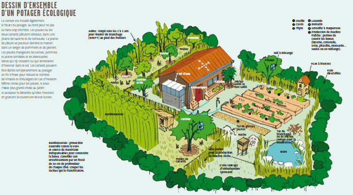 Ressources pour permaculture baratze pinterest for Permaculture petit jardin