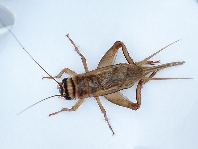 Are You Eating Insects and Your Dog Too? Getting rid of