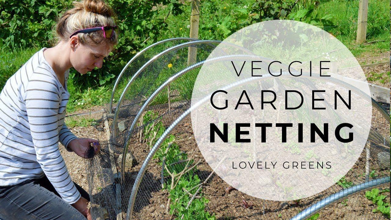 Garden Netting Protecting Crops In The Veggie Garden Youtube