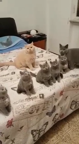 Cute Cat Family -  Cute Cat Family watching and playing with their owner #cute #cats #kittens #pets #catlovers   - #allergictocats #Cat #catcat #cattattoo #catwallpaper #catsandkittens #crazycats #Cute #dogcat #Family #petscats
