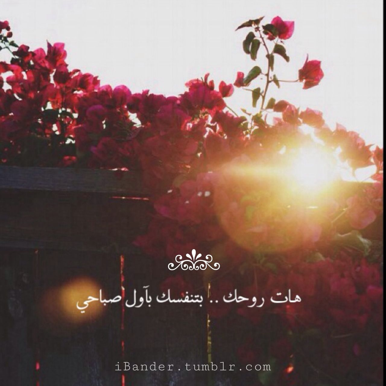 Bander هات روحك بتنفسك Beautiful Morning Messages Morning Love Quotes Romantic Words