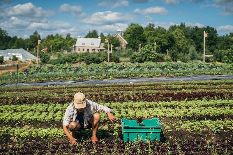 J.M. Fortier and the Rise of the HighProfit Micro Farm Ing