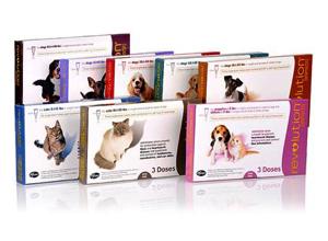 Revolution Your Pet Cat Vs Dog Heartworm Prevention