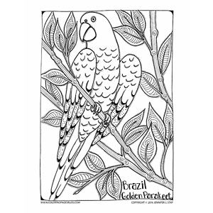 Brazil Inspired Coloring Pages Bird Coloring Pages Coloring Pages Coloring Pages For Grown Ups