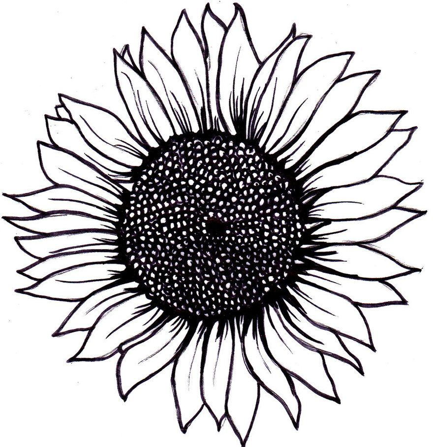 Best Sunflower Drawing Black And White on Uncategorized ... for Clipart Sunflower Black And White  83fiz