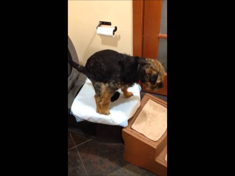 How To Potty Train Your Dog To Use The Toilet 2 Dog Toilet