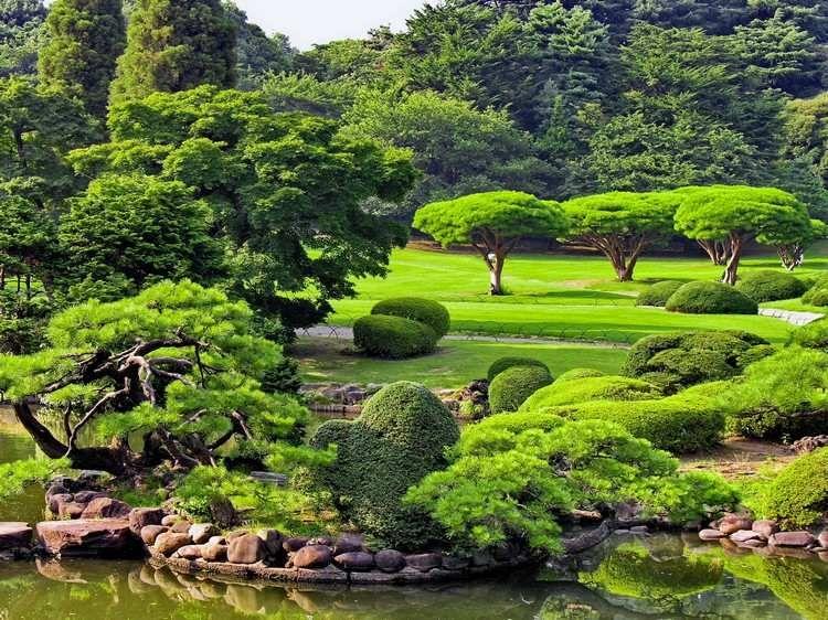 jardins japonais avec des plantes vertes, buis taillés et bassin ...