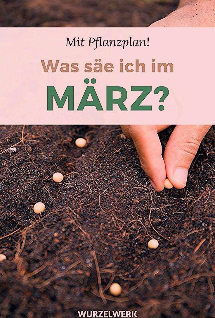 Photo of Aussaat & Pflanzen im März + Beispiel-Pflanzplan – Wurzelwerk
