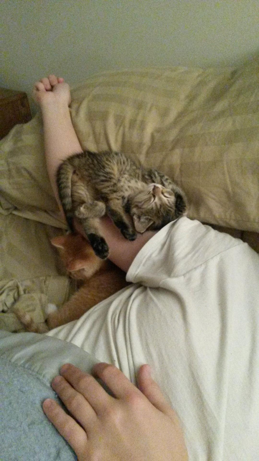 Awwww Cute My Kitten Fell Off My Pillow But Kept Napping Away Cats Kittens Crazy Cats