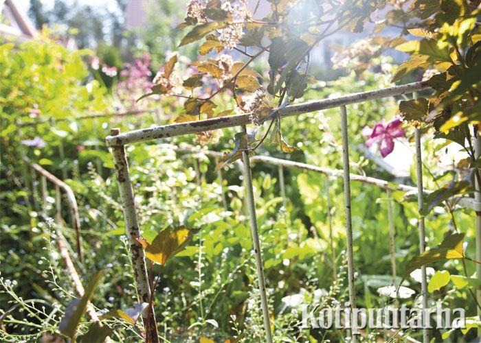 Huoleton ja boheemi puutarha kätkee sisäänsä kaikkea yllättävää. Vaikka tällaisen vanhan sängyn rungon. www.kotipuutarha.fi