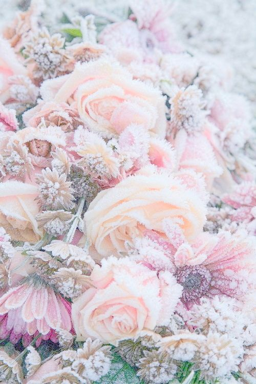 sweetyunicorn pink pastel fashion kawaii fall. Black Bedroom Furniture Sets. Home Design Ideas