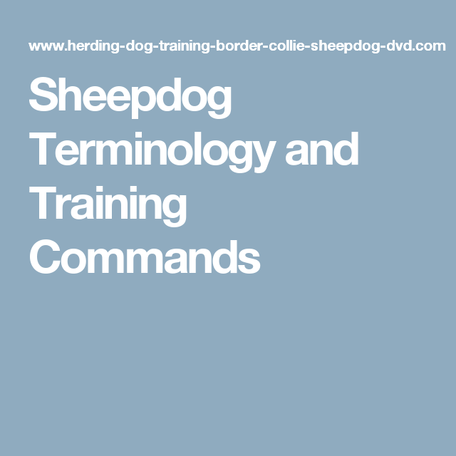 Sheepdog Terminology and Training Commands