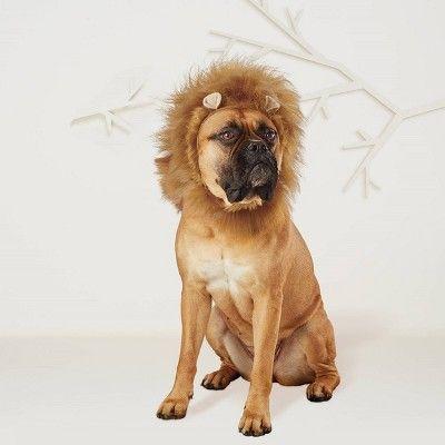 Halloween Lion Mane Dog Cat Costume Xs S Hyde Eek