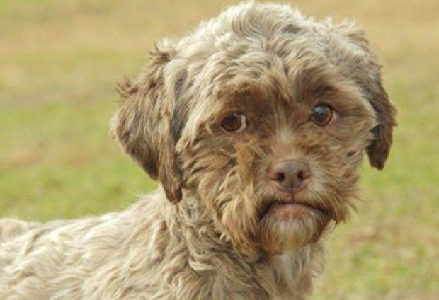 Foto de cão com 'face humana' faz sucesso na internet | Globos