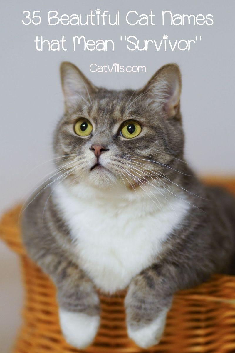 Top 35 Cat Names That Mean Survivor Catvills Cute Cat Names Grey Cat Names Cat Names