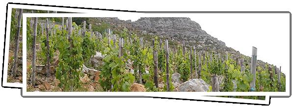 Hout Bay Vineyards