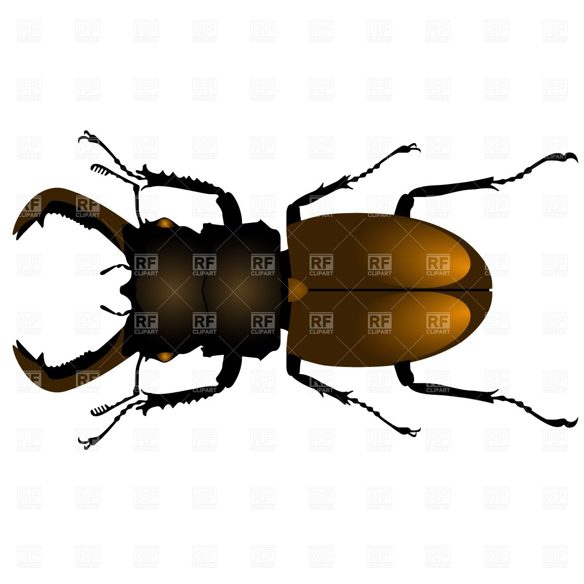 Image Result For Stag Beetle