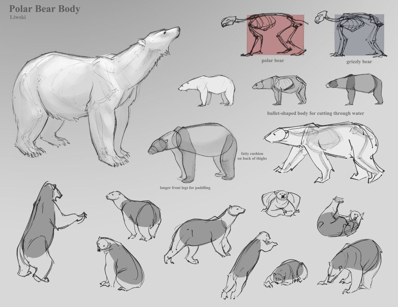 Art References - drawing bears | Animation | Pinterest | Art ...