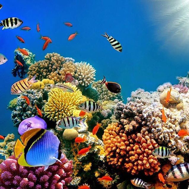 Spectacular Dive Sites You Have To See To Believe The