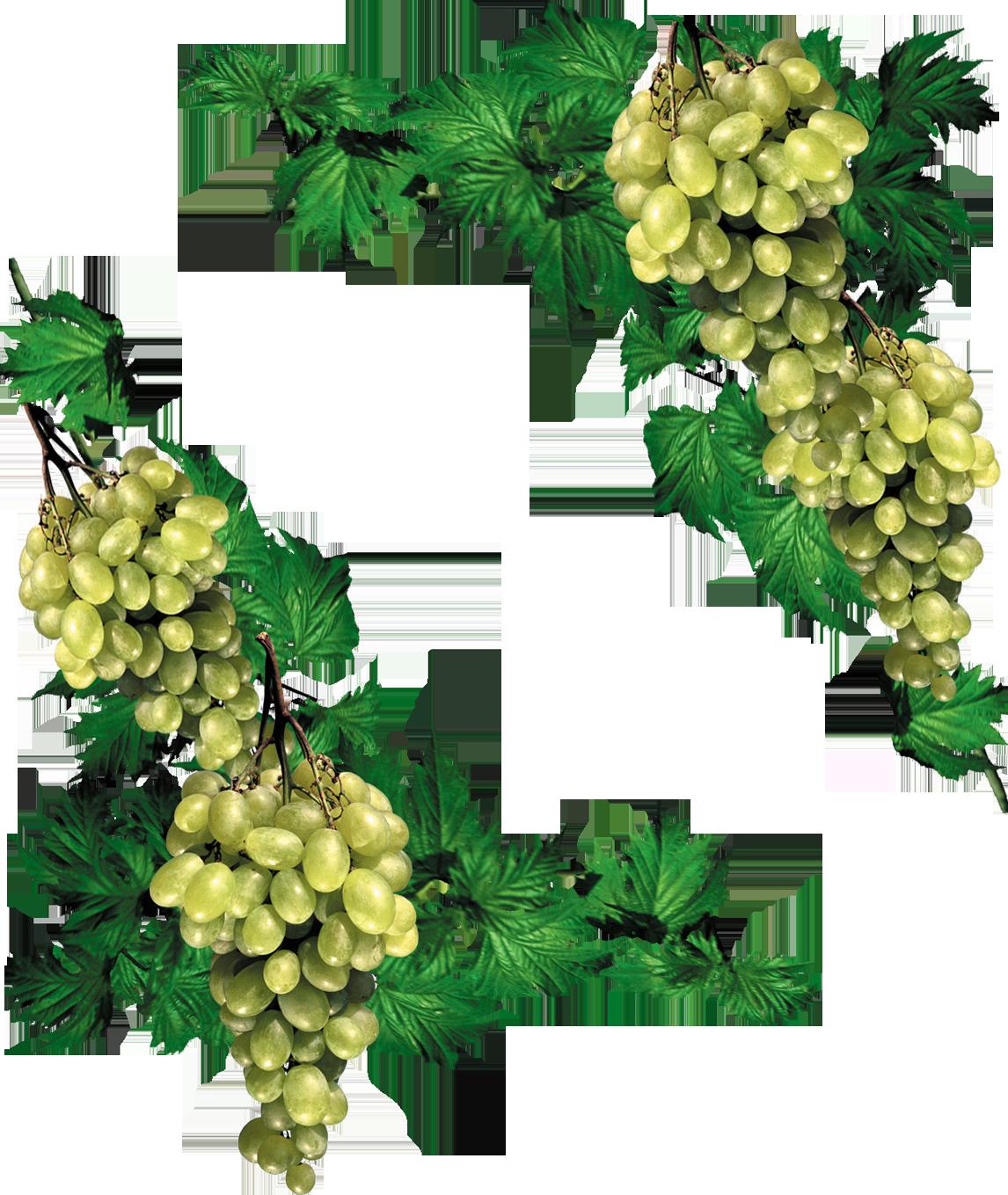 виноград картинки уголки что редкие