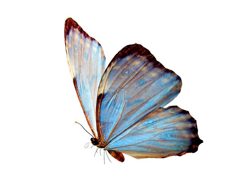 http://www.renders-graphiques.fr/image/upload/normal/papillon-1.png |  Butterfly art, Butterfly wallpaper, Butterfly
