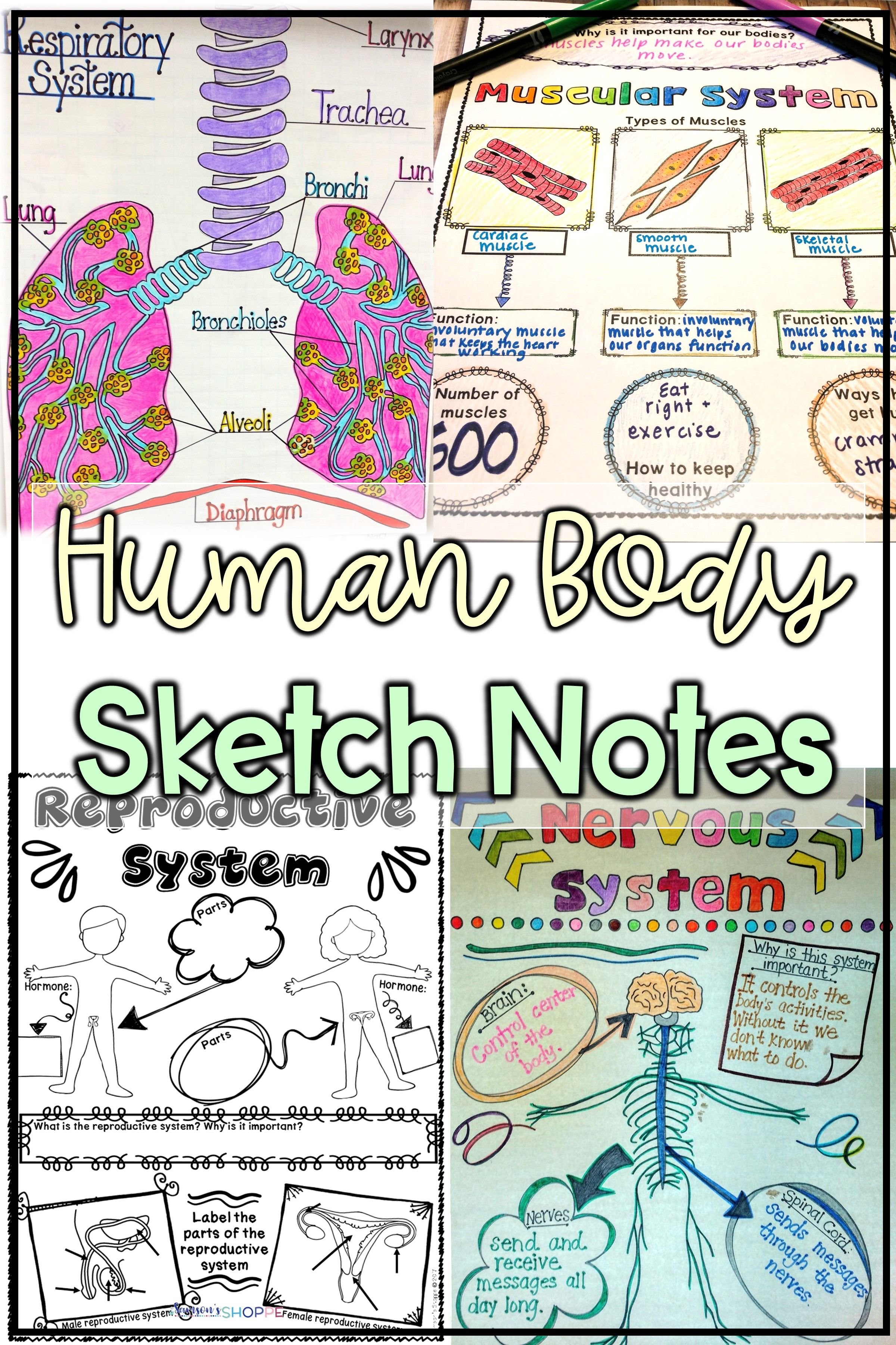 Human Body   Doodle Sketch Notes   Engage and excite students with this  formative assess…   Human body middle school [ 3600 x 2400 Pixel ]